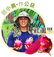 彰化二林紅龍果